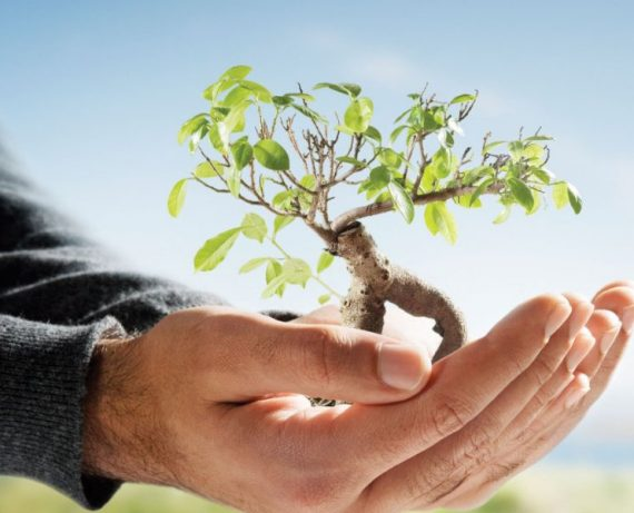 Educação Ambiental no Contexto Escolar