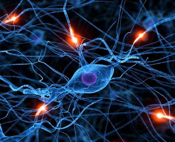Aprendizagem Emocional: Aspectos Neurobiológicos